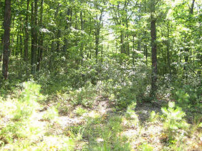Hinton Lots & Land For Sale: Lot 47 Birds Nest Rd