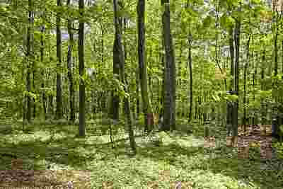 Nelson County Lots & Land For Sale: 23 Grassy Ovlk