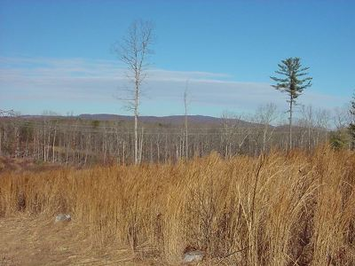 Albemarle County Lots & Land For Sale: 4722 Presidents Rd