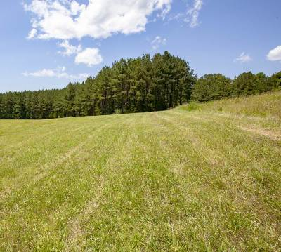 Albemarle County Lots & Land For Sale: 3099 Stony Point Rd