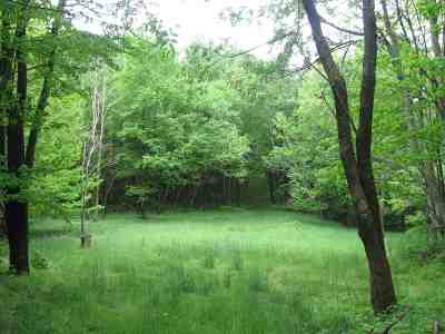 Lots & Land For Sale: 7908 Mountain Tpke