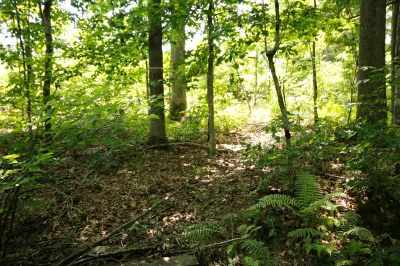 Fluvanna County Lots & Land For Sale: Bluebird Ln