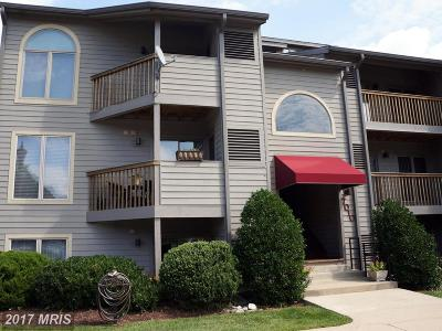 Rental For Rent: 7010 Channel Village Court #202