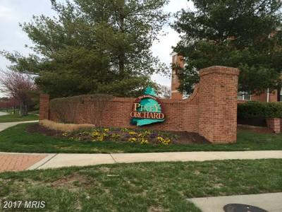 Piney Orchard, Chapel Grove Rental For Rent: 2403 Forest Edge Court #204