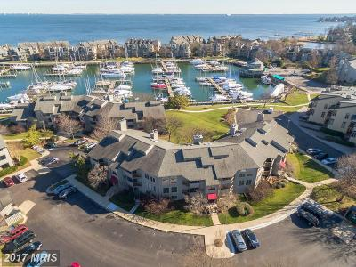 Anne Arundel Condo For Sale: 7048 Harbour Village Court #102