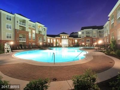 Anne Arundel Rental For Rent: 1453 Coventry Drive #101