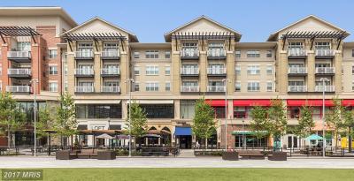 Arlington Rental For Rent: 1201 Joyce Street