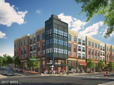 Arlington Condo For Sale: 989 Buchanan Street S #204