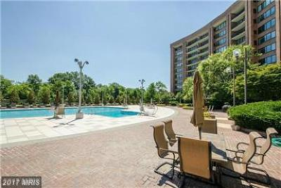 Arlington Condo For Sale: 1805 Crystal Drive #311S