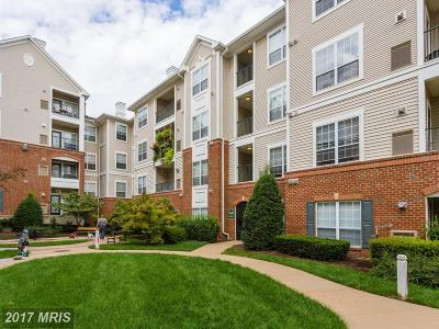 Alexandria Condo For Sale: 4850 Eisenhower Avenue #322