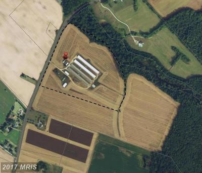 Caroline County, Caroline Farm For Sale: 7347 Harmony Road