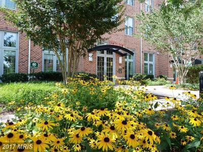 Rental For Rent: 1391 Pennsylvania Avenue SE #360