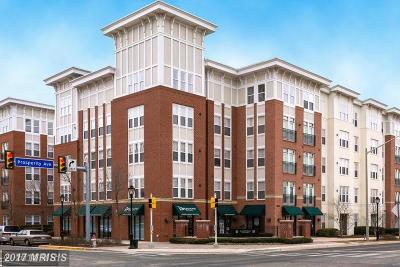Fairfax Rental For Rent: 2665 Prosperity Avenue #210