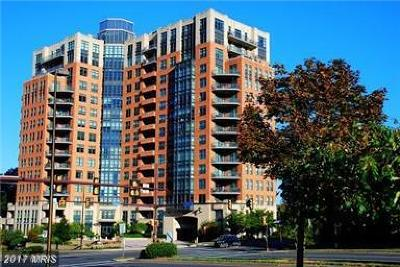 Reston Rental For Rent: 1830 Fountain Drive NW #706