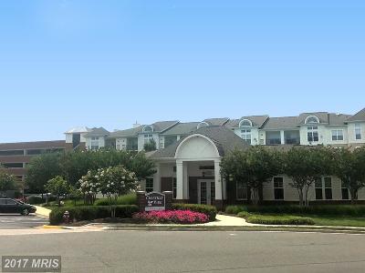 Chantilly Rental For Rent: 3810 Lightfoot Street #312