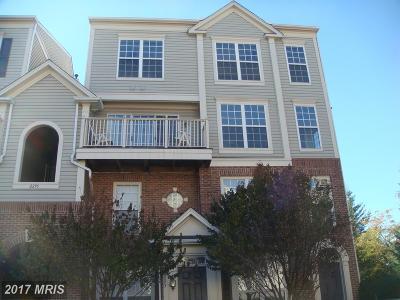 Falls Church Rental For Rent: 2295 Village Crossing Road #301