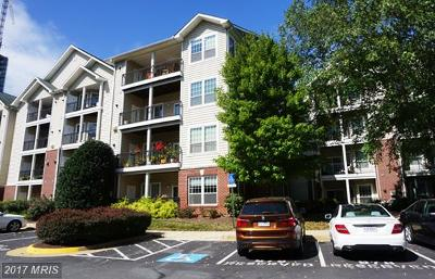 McLean Rental For Rent: 1600 Spring Gate Drive #2414