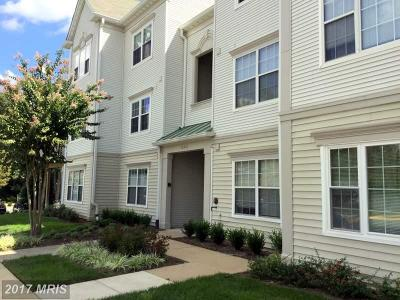 Fairfax Rental For Rent: 12451 Hayes Court #301