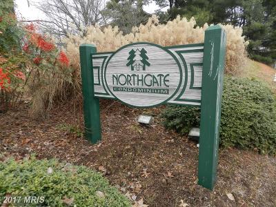 Reston Rental For Rent: 1407 Northgate Square #2C