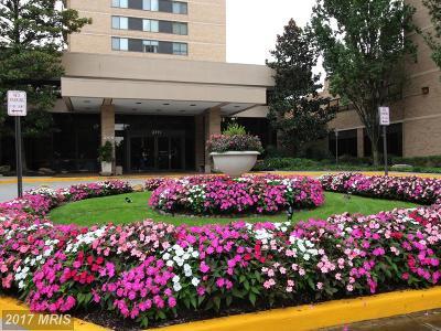 Falls Church Rental For Rent: 3713 George Mason Drive #1412