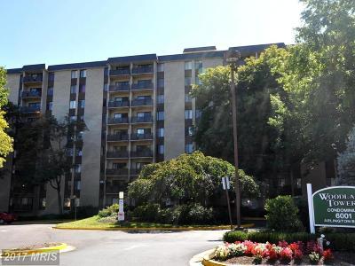 Washington, Montgomery, Fairfax Rental For Rent: 6001 Arlington Boulevard #812