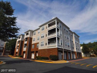 Washington, Montgomery, Fairfax Rental For Rent: 4300 Cannon Ridge Court #E