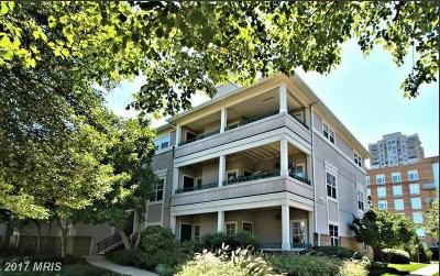 Reston Rental For Rent: 12001 Taliesin Place #23