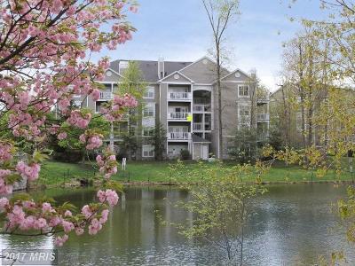 Reston Rental For Rent: 1724 Lake Shore Crest Drive #24