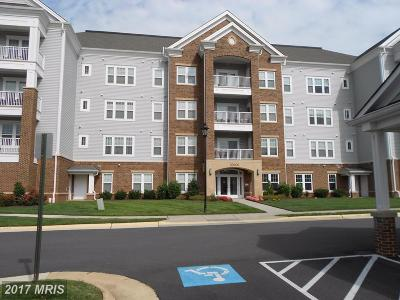 Ashburn Condo For Sale: 20600 Hope Spring Terrace #203