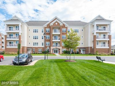 Ashburn Rental For Rent: 20610 Hope Spring Terrace #407