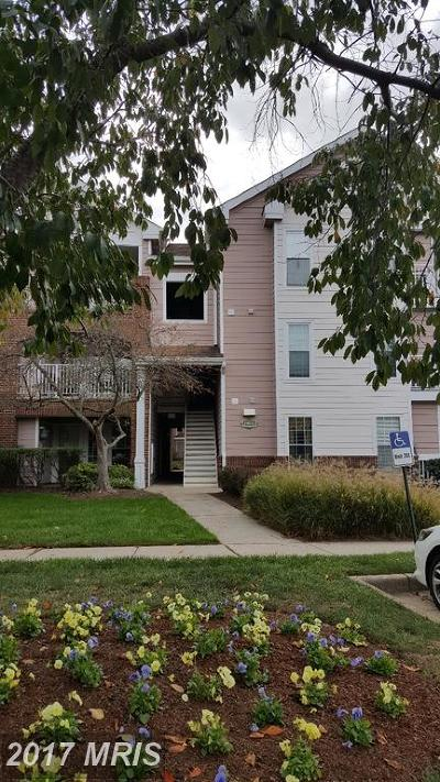 Ashburn Rental For Rent: 21033 Timber Ridge Terrace #304