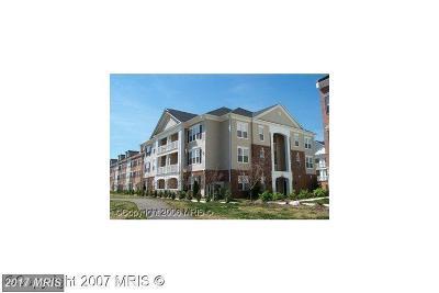 Ashburn Rental For Rent: 42481 Rockrose Square #303