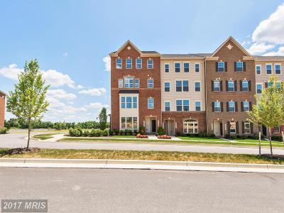 Clarksburg Townhouse For Sale: 13756 Dovekie Avenue #D
