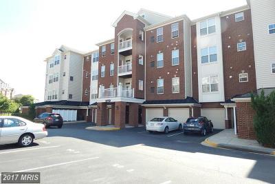 Manassas Park Rental For Rent: 9710 Handerson Place #407