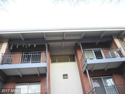Beltsville Rental For Rent: 11318 Cherry Hill Road #303