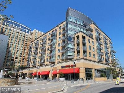 Hyattsville Rental For Rent: 6506 America Boulevard #701