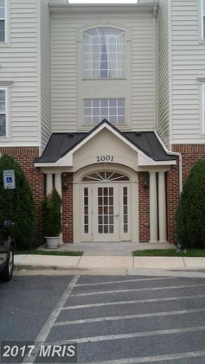 Bowie Rental For Rent: 2001 Connor Court #M