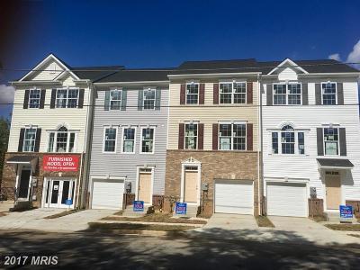Beltsville Rental For Rent: 11342 Cherry Hill Road #104