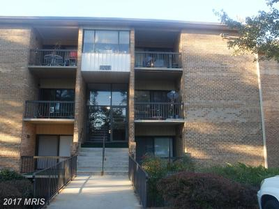 Beltsville Rental For Rent: 11206 Cherry Hill Road #97