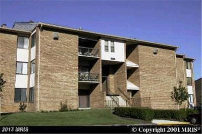 Beltsville Rental For Rent: 11230 Cherry Hill Road #191