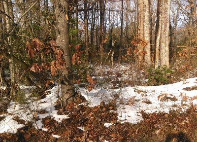 Richmond County Residential Lots & Land For Sale: 00 Menokin Road