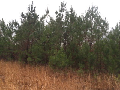 Richmond County Residential Lots & Land For Sale: Ridge Road