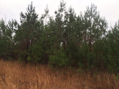 Richmond County Residential Lots & Land For Sale: Lot 1 Richmond Hill Road