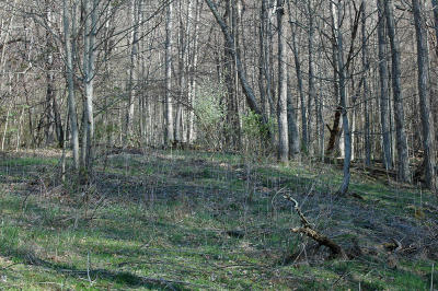 Giles County Residential Lots & Land For Sale: Lot H Springdale Rd Road