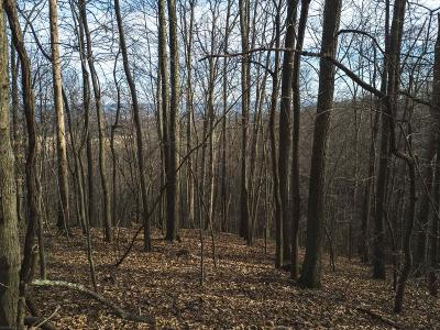 Pearisburg Residential Lots & Land For Sale: Virginia Street