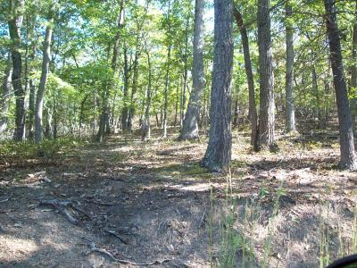 Residential Lots & Land For Sale: Craig Creek Rd