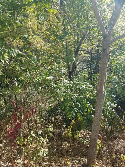 Roanoke Residential Lots & Land For Sale: Sioux Ridge Rd
