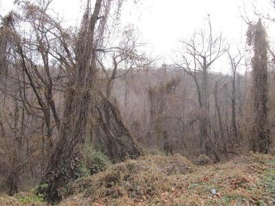 Salem Residential Lots & Land For Sale: Dogwood Ln