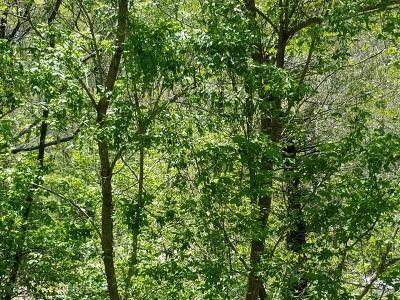 Residential Lots & Land For Sale: 10431 Bent Mountain Rd
