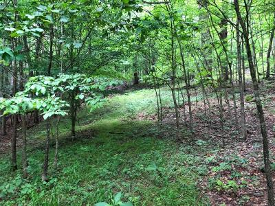 Residential Lots & Land For Sale: Sugar Tree Hollow Rd